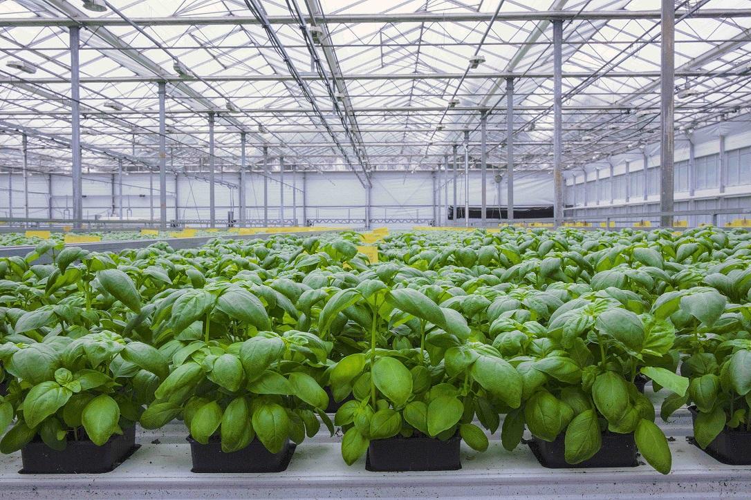 Produção biológica sem solo, não. Porquê?
