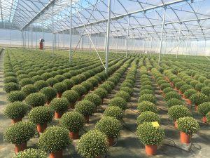 Portugal Fresh teme «quebra significativa» nas exportações de frutas, legumes e flores