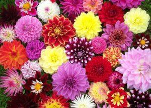 Produtores de flores pedem 50 milhões € ao Governo para sobreviver à crise