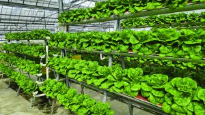 A importância do pH e da Condutividade da água no cultivo com hidroponia