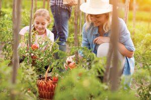 Benefícios da Horticultura na saúde mental
